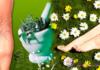варикозное расширение вен лечение травами