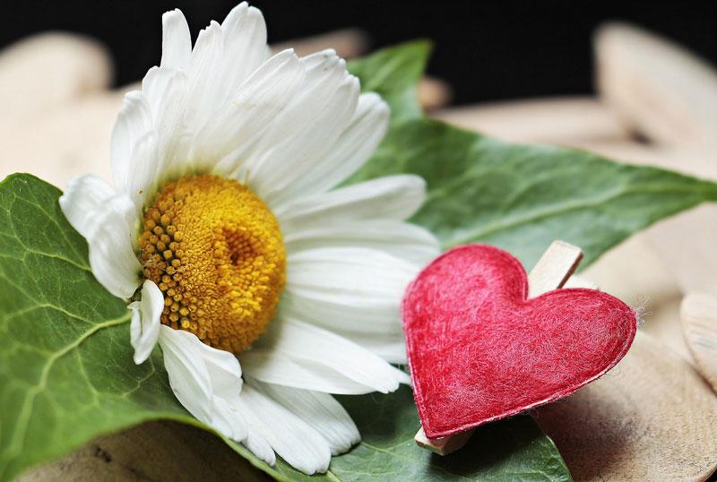 Лечение кардиосклероза народными средствами и методами