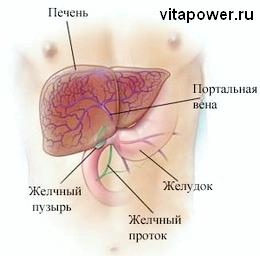 здоровье паразиты в организме